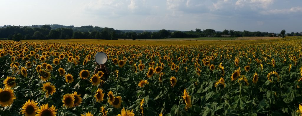 Michael Gould holding a drum above his head standing in a giant field of sunflowers. Gould is almost invisible because the flowers are so tall and the field is so large.